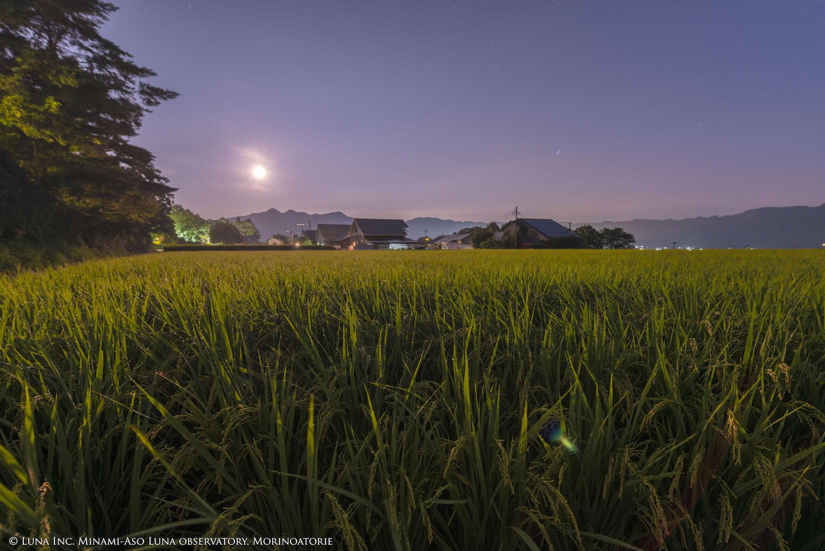外輪山から顔を出した月に照らされる、黄金色の田圃。