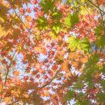 もうすぐ紅葉シーズンが始まります