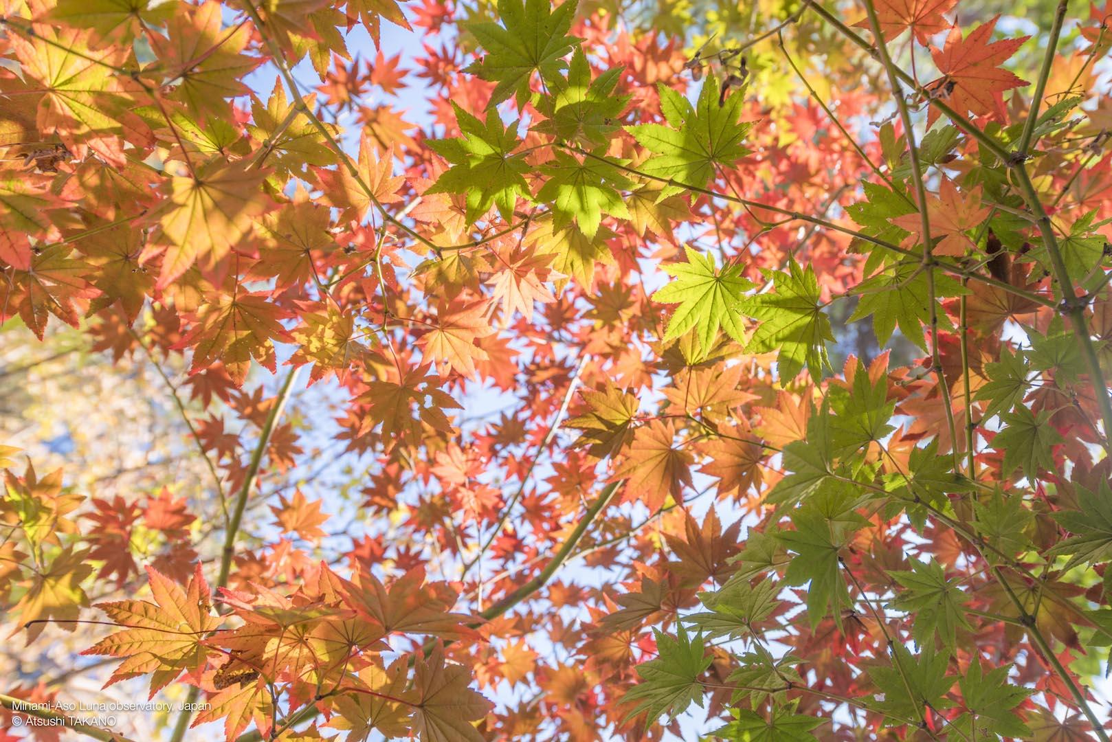 ガーデンの紅葉、始まりました!
