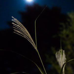 すすきと秋の月
